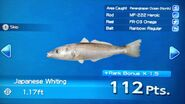 Japanese Whiting Turn In