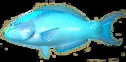 Parrotfish AD
