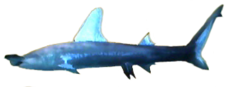 Hammerhead Shark AD