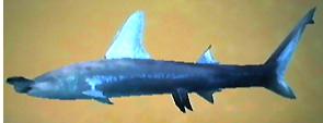 File:Hammerhead Shark AD.png