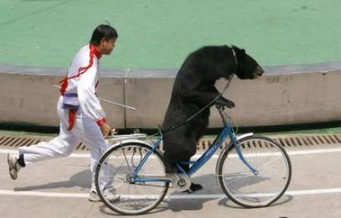 File:BearOnBike.jpg