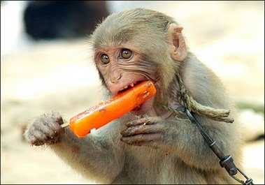 MonkeyPopsicle