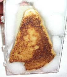 File:Virgin mary grilled cheese.jpg