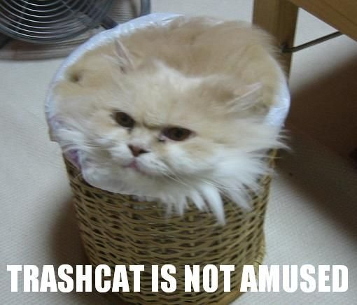File:Trashcat.jpg