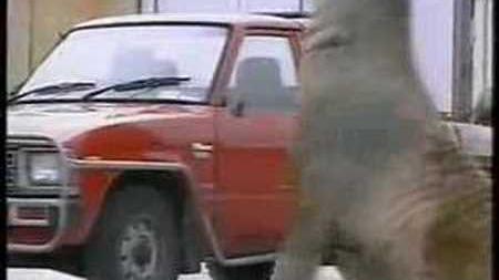 Elephant Seal Attacks cars