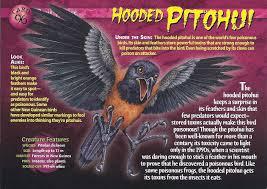 File:Hoded pithoui 1.jpg