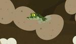 Croc.00250