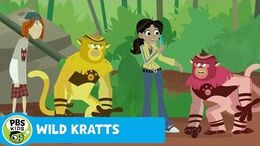 WILD KRATTS No Color, No Fun PBS KIDS