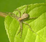 Spider1 pic