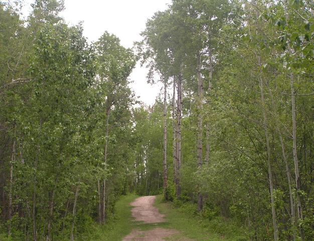 File:Habitat, aspen woodland.png