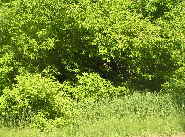 File:Habitat, woodland edge.png
