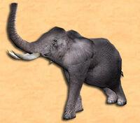 Tier elefant