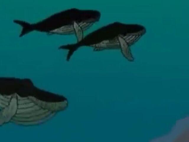 File:Whale Songs.JPG