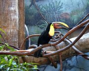 New-york-central-park-zoo