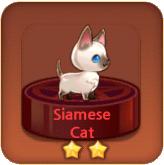 File:Siamese Cat.png