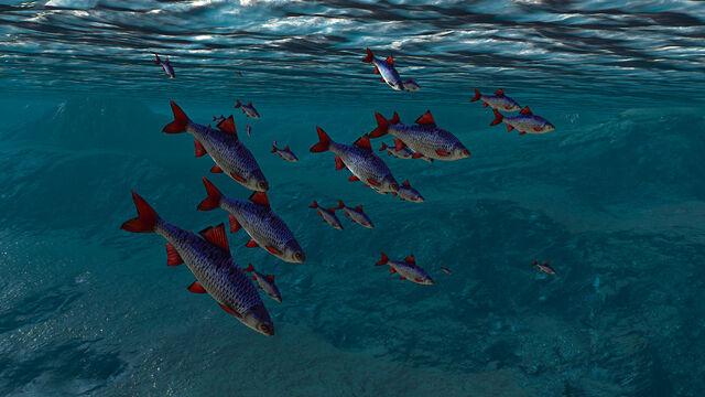 File:Fishes in witcher 3.jpg
