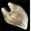 File:Substances Devourer teeth.png