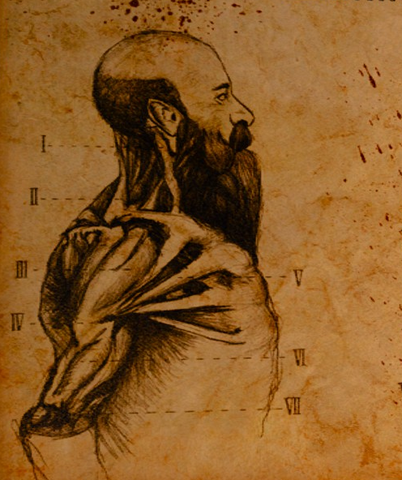 File:Tw3 anatomy of male dwarven body.png