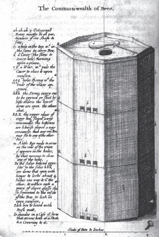 File:Copy-of-commonwealth-of-bees-wren-hive-design.jpg