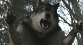 WB Wolf 53