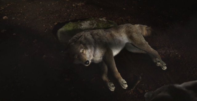 File:WB Wolf 49.PNG