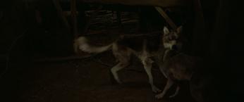 WB Wolf 39