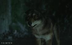WB Wolf 4