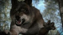 WB Wolf 76