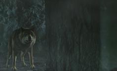 WB Wolf 2