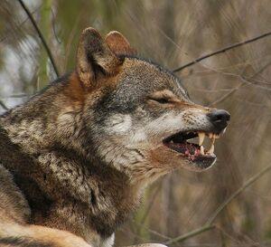 Grumpy Dog Bad Dogs