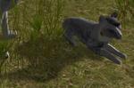 Wq2.0.3 zombie pup