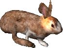 2.7 hare spring flee