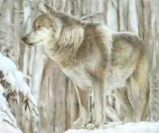 File:AlaskanTwolf6.jpg