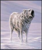 File:Articwolf.jpg
