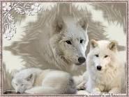 File:Articwolf8.jpg