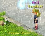 Common Grass 1