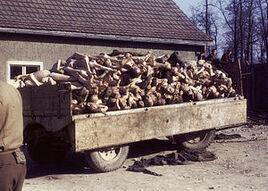 Buchenwald Corpses