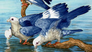 BlueparrotADON 468x301