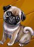 Collection-Pug