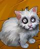 Collection-Kitten