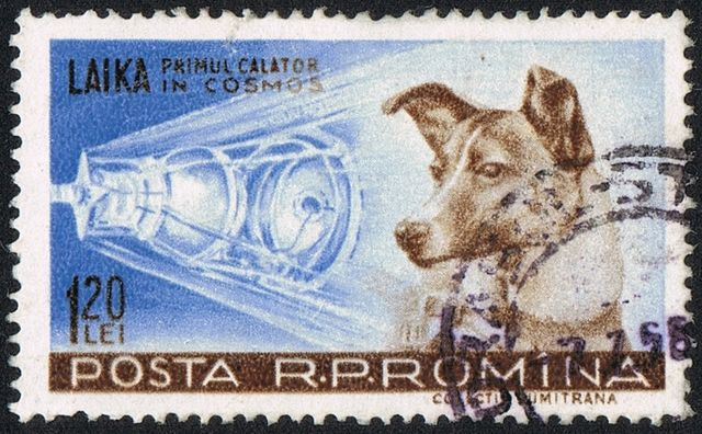File:Laika Briefmarke.jpg