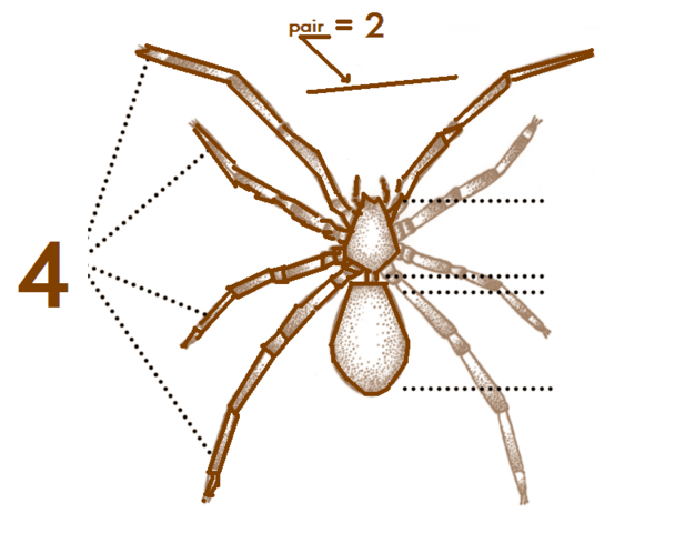 File:Ana Spider-characteristics.png