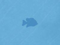 Inlandsunfish shape