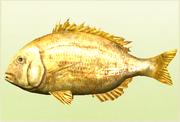 Legendary Fish 3