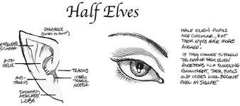 Half elves