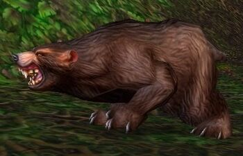 Ashenvale Bear