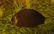 Dark soil