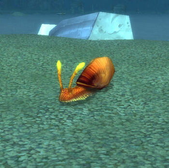 Shimmershell Snail