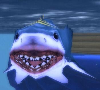 North Sea Blue Shark