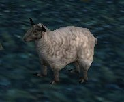 Image of Black Lamb